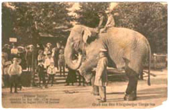 állatkert 1910-ben
