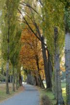 fasorral szegélyezett kerékpárút a Balatongyöröki mólónál