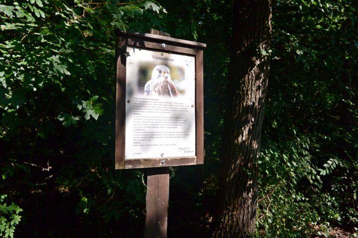 a sajkodi strandtól induló erdei úton 10 méterenként az állatvilágot bemutató táblák állnak