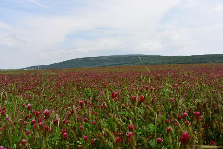 virágos mező a Tardosi kőbányával a háttérben