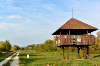 madárles a Kis-Balatonhoz vezető kerékpáros útvonal mellett