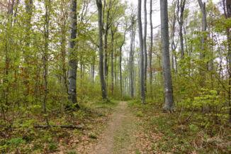 zöld háromszög jelzés az erdőben a Két-bükkfa-nyereg és a Pilis-nyereg között