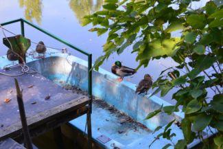 kacsák egy régi csónakban a Kék-tónál