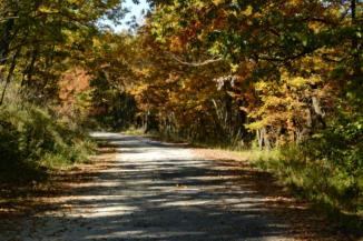 békés erdőszakaszon tekerünk