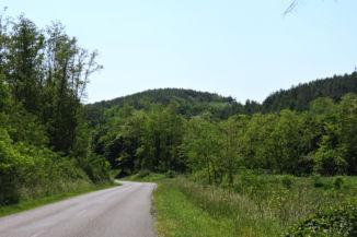 Viszt elhagyva dombokkal keretezett, erdei szakasz következik