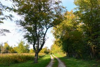 sóderes ösvény Sávoly közelében