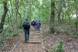 erdei ösvényen át jutunk fel a Folly Arborétum kilátójához