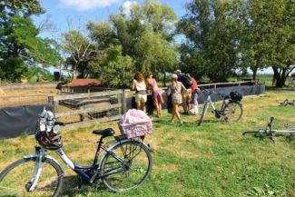 biciklitúrázók a mangalica telep mellett